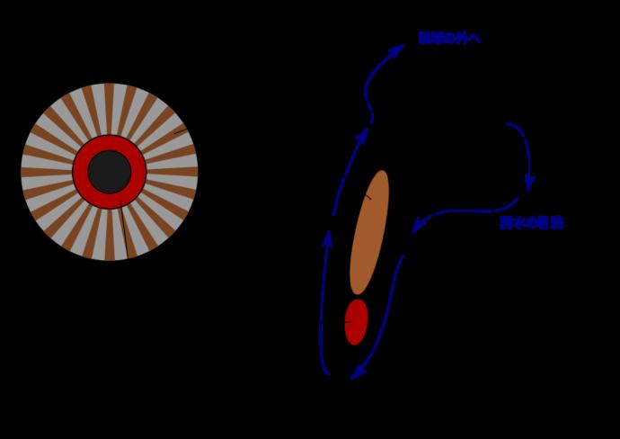 眼の構造1